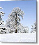 Winter Tree Line Metal Print by Tim Gainey