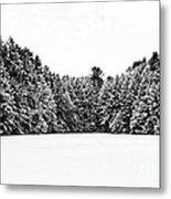 Winter Trees Mink Brook Hanover Nh Metal Print by Edward Fielding