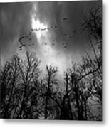 Winter Trees Moving Sky Metal Print by Bob Orsillo