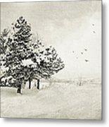 Winter White Metal Print by Julie Palencia