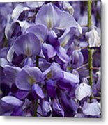 Wisteria Metal Print by Michael Friedman