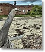 Wooden Seal Metal Print by Adam Jewell