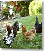 Yard Party With The Chickens Metal Print by Artist and Photographer Laura Wrede