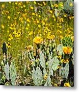 Yellow Blooms Metal Print by Mark Weaver