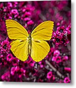 Yellow Butterfly Metal Print by Garry Gay
