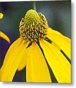 Yellow Cone Flower Rudbeckia Metal Print by Rich Franco