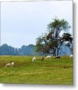 Yellow Fields Metal Print by Jan Amiss Photography