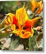 Yellow Flower Metal Print by Gregory Dyer