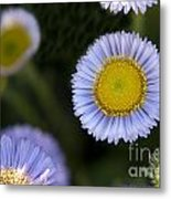 Yellow In The Middle Metal Print by Artist and Photographer Laura Wrede