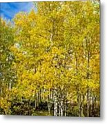 Yellows Of Fall Metal Print by Baywest Imaging