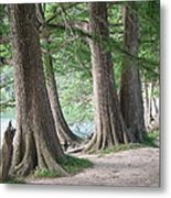 Yesterday's Trees Metal Print by Wendy J St Christopher