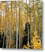 Young Aspens Metal Print by Eric Glaser