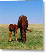 Young Colt And Mother Metal Print by Jeff Swan