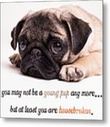 Young Pup Metal Print by Edward Fielding