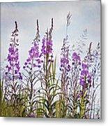 Yukon State Flower Metal Print by Priska Wettstein