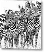 Zebra Quintet Metal Print by Mike Gaudaur
