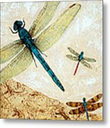 Zen Flight - Dragonfly Art By Sharon Cummings Metal Print by Sharon Cummings