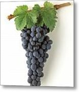 Zinfandel Cluster On White Metal Print by Craig Lovell