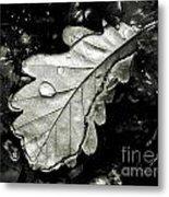 Leaf Metal Print by Odon Czintos