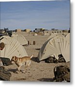 A Dog Handler And His Military Working Metal Print by Stocktrek Images