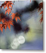 Autumn Red  Metal Print by Rob Travis