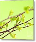 Branches With Green Spring Leaves Metal Print by Elena Elisseeva