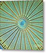 Diatom Alga, Arachnoidiscus Metal Print by Eric Grave