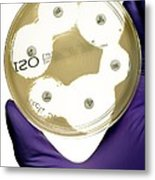 E. Coli Bacteria Sensitivity Test Metal Print by Doncaster And Bassetlaw Hospitals