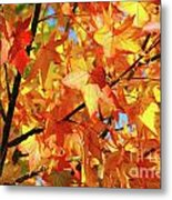 Fall Colors Metal Print by Carlos Caetano