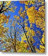 Fall Maple Trees Metal Print by Elena Elisseeva