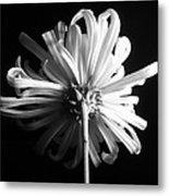Flower Metal Print by Sumit Mehndiratta