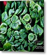 Fresh Chives Metal Print by Susan Herber