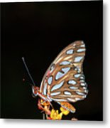 Gulf Fritillary Butterfly Metal Print by Jim McKinley