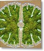 Microsterias Green Alga, Light Micrograph Metal Print by Frank Fox