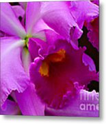Orchid 5 Metal Print by Julie Palencia