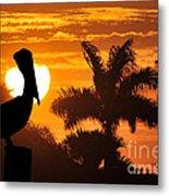 Pelican At Sunset Metal Print by Dan Friend
