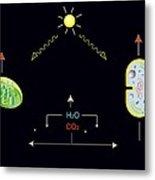 Photosynthesis, Artwork Metal Print by Francis Leroy, Biocosmos