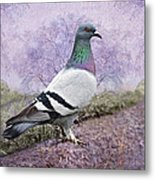 Pigeon In The Park Metal Print by Bonnie Barry