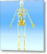 Skeleton And Ligaments, Artwork Metal Print by Roger Harris