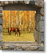Stone Window View And Beautiful Horse Metal Print by James BO  Insogna