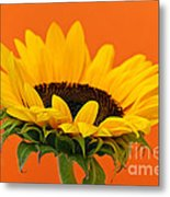 Sunflower Closeup Metal Print by Elena Elisseeva
