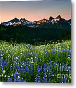 Tatoosh Dawn Metal Print by Mike  Dawson