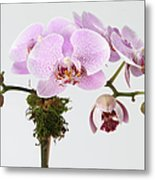 The Branch Of A Flowering Orchid Metal Print by Nicholas Eveleigh