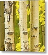 Three Autumn Aspens Metal Print by James BO  Insogna