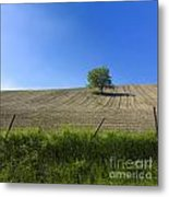 Tree  Metal Print by Bernard Jaubert