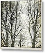 Winter Trees Metal Print by Silvia Ganora