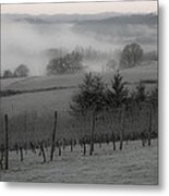 Winter Vineyard Metal Print by Jean Noren