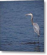1206-9280 Great Blue Heron 1 Metal Print by Randy Forrester