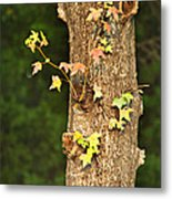 1209-0859 September Tease Metal Print by Randy Forrester