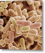 E. Coli Bacteria, Sem Metal Print by Steve Gschmeissner